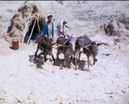 depiquage animal meknes 1968.jpg
